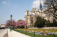 Springtime flowers bloom outside of the Cathedral of Notre Dame in Paris, France.