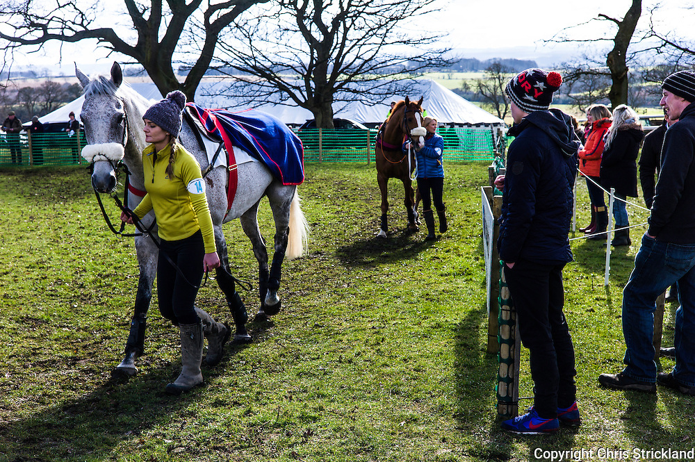 Corbridge, Northumberland, England, UK. 28th February 2016. ProbablyGeorge in the paddock at he Tynedale Hunt annual Point to Point horse racing fixture.