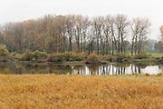 Donaualtwasser Winzerer Letten bei Hengersberg, Donau, Bayerischer Wald, Bayern, Deutschland | nature reserve Donaualtwasser Winzerer Letten, Danube, Bavarian Forest, Bavaria, Germany