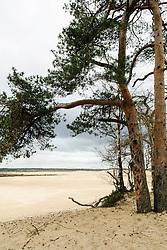 NP Loonse en Drunense Duinen, Natuurmonumenten, Drunen, Netherlands