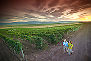 Southwest Idaho.  Vineyard overlooking the Owyhee Mountains near the Snake River. Couple walking through winery with dramatic sunset. MR