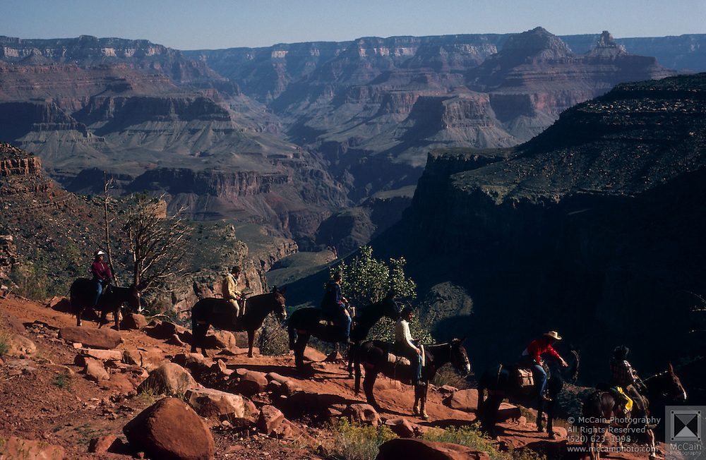 Riders on mule train near South Rim, Bright Angel Trail, Grand Canyon National Park, Arizona..Subject photograph(s) are copyright Edward McCain. All rights are reserved except those specifically granted by Edward McCain in writing prior to publication...McCain Photography.211 S 4th Avenue.Tucson, AZ 85701-2103.(520) 623-1998.mobile: (520) 990-0999.fax: (520) 623-1190.http://www.mccainphoto.com.edward@mccainphoto.com.
