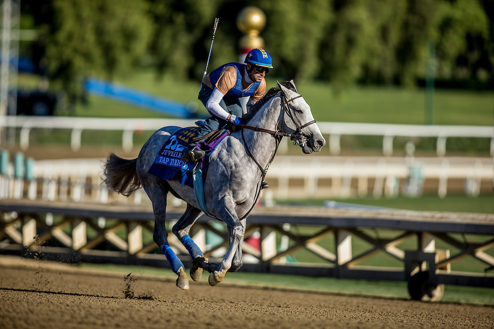 Tap It Rich trains for the Breeders' Cup Juvenile  at Santa Anita Park in Arcadia, California on October 31, 2013. (Alex Evers/ Eclipse Sportswire)