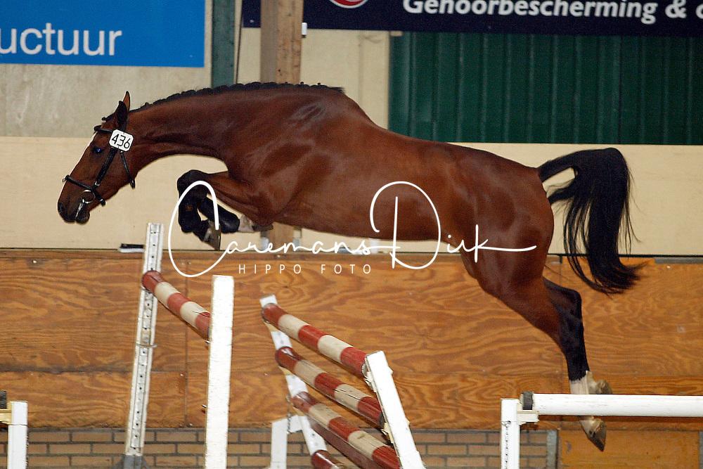 436-Tisolde<br />KWPN Paardendagen Ermelo 2003<br />Photo &copy; Dirk Caremans