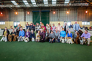 Crufts  competitors