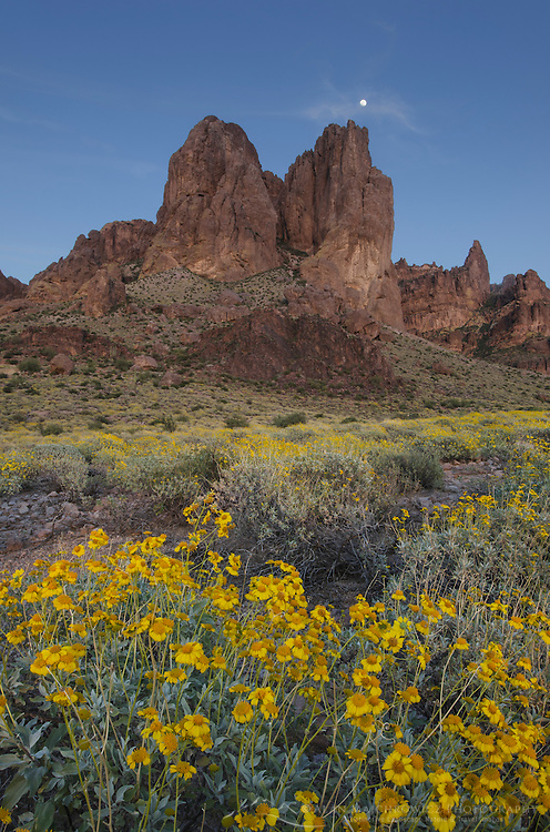 Superstition Mountains, Arizona, yellow flowers of Brittlebush (Encelia farinosa) in the foreground