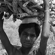 Young Indian boy carrying fire wood in his village located in the outskirts of Udaipur in Rajasthan, India.