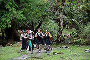 Female Tamang porters in traditional Tibetan dress walk together carrying loads in the Langtang Valley, Nepal, 27th May 2009. The 'Pangden' (striped, woven woollen apron) is belted with an ornate brass belt at the waist from which hangs a silver medicine spoon.<br /> <br /> According to Dorothea Stumm, a glaciologist at the Nepal-based International Centre for Integrated Mountain Development, a massive hanging glacier cracked when an earthquake struck at 11.56am on the 25th April 2015. The ice formed a cloud that gathered snow and rocks and then funnelled down the mountain, burying Langtang village, and creating an enormous pressurised blast. 400 residents of the village and up to 100 trekkers are believed to have been killed.<br /> <br /> PHOTOGRAPH BY AND COPYRIGHT OF SIMON DE TREY-WHITE<br /> <br /> + 91 98103 99809<br /> email: simon@simondetreywhite.com<br /> photographer in delhi