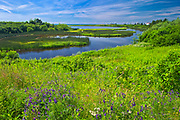 Wildflowers on the coast<br />