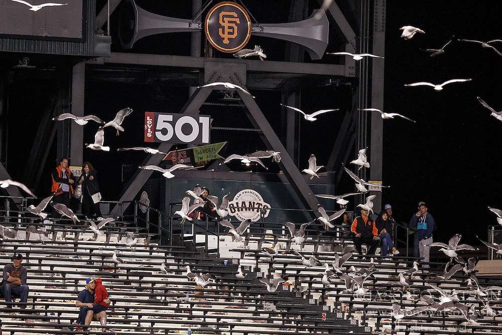 SAN FRANCISCO, CA - APRIL 18:  A flock of seagulls land in the outfield bleachers during the eleventh inning between the San Francisco Giants and the Arizona Diamondbacks at AT&T Park on April 18, 2016 in San Francisco, California. The Arizona Diamondbacks defeated the San Francisco Giants 9-7 in 11 innings.  (Photo by Jason O. Watson/Getty Images) *** Local Caption ***
