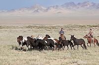 Mongolie. Province de Khovd. Rassemblement des troupeaux de chevaux. // Rallying of horses drove. Khovd province. Mongolia.