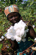 Benin november 22, 2001 - Cotton picker in cotton fileds at the center on Benin.( Jean-Michel Clajot )