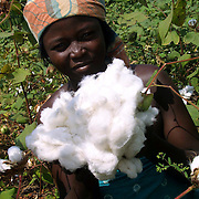 Benin november 22, 2001 - Cotton picker in cotton fileds at the center on Benin.( Jean-Michel Clajot )