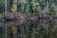 Various tree species are reflected in the waters of Buntzen Lake in the fall.  Photographed from the floating bridge at the south end of Buntzen Lake near Anmore, British Columbia, Canada.