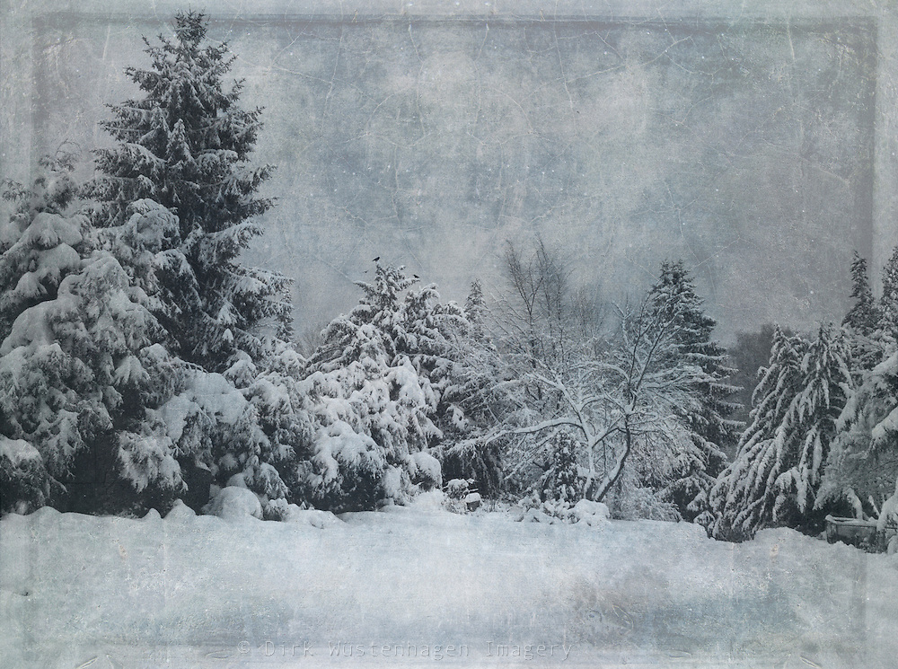 Snow covered trees - texturized photography<br /> <br /> Prints: http://society6.com/DirkWuestenhagenImagery