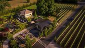 DANCIN Vineyards 2017
