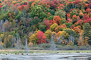 Fall foliage from maple trees at the Beaver Pond in Gatineau Park in Gatineau, Québec, Canada.  Photographed from the Gatineau Parkway during the Fall Rhapsody festival at Gatineau Park.