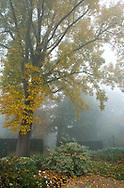 Autumn foliage on a foggy day in the Savill Garden, Windsor Great Park, Surrey, UK