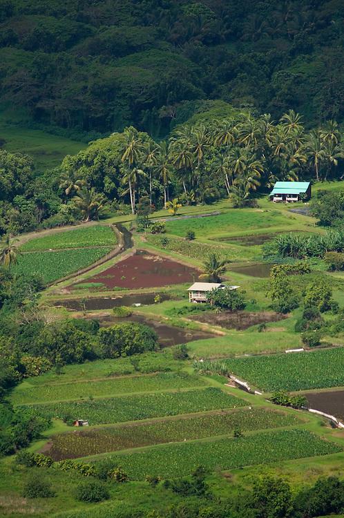 Taro fields in Waipio Valley; Hamakua Coast, Island of Hawaii..#0604914