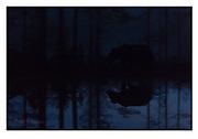 Midnight brown bear. Nikon D4, 70-200mm @ 180mm, f2.8, 1/10 sec, ISO5000, Manual