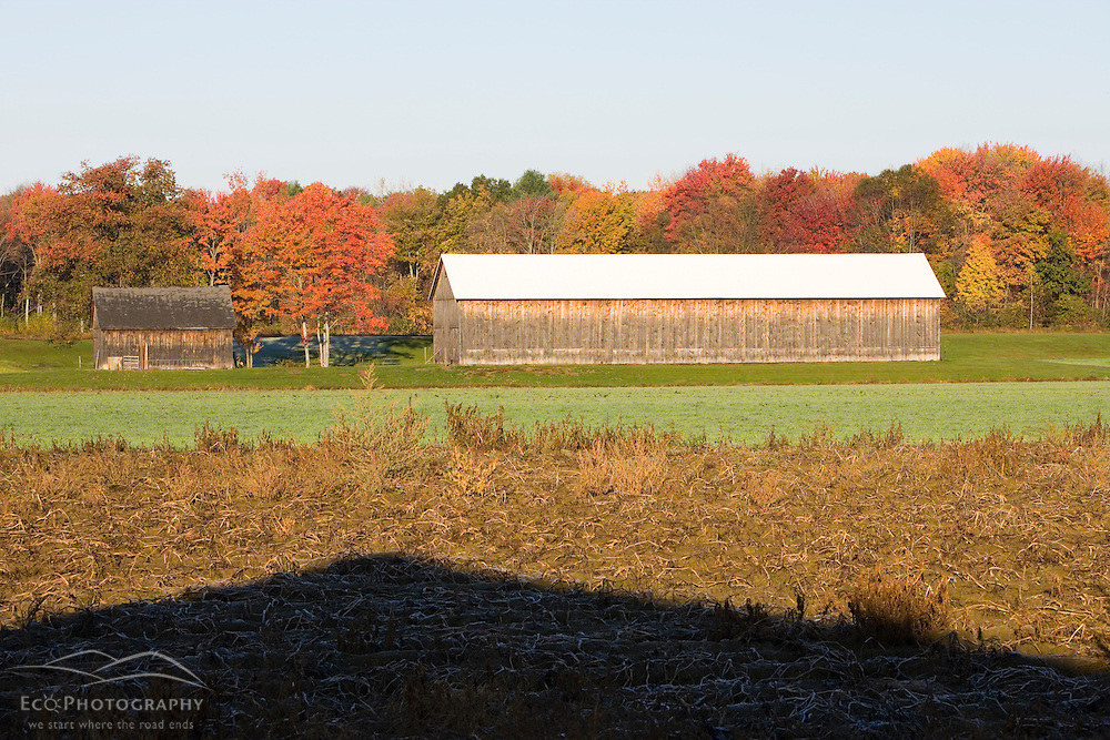 A tobacco barn on a farm in Whatley, Massachusetts.
