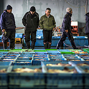 Buying fish at the harbour in Toyo-ura, Hokkaido