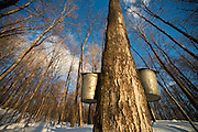 Maple sugaring is a family tradition at the Russell Farm in Hinesburg, Vermont.