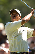 Jul 30, 2005; Grand Blanc, MI, USA; Tiger Woods watches his tee shot on the 8th hole during play Saturday at the 2005 Buick Open, Warwick Hills Golf & Country Club. Copyright © 2005 Kevin Johnston