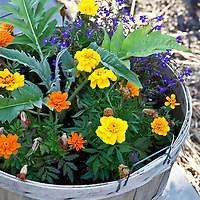 Bushel basket container garden with a mix of flowers and edible plants.