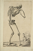 "Male full body back skeleton woodcut print at the opening of the Human Anatomy book ""Notomie di Titiano"" Printed in Italy in 1670"