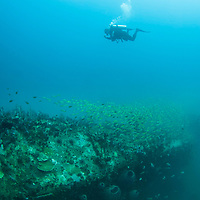 Diver swimming over the Rice Bowl Wreck, Sabah, Borneo, East Malaysia.
