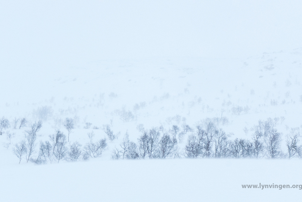 Whiteout Norwegian winter landscape