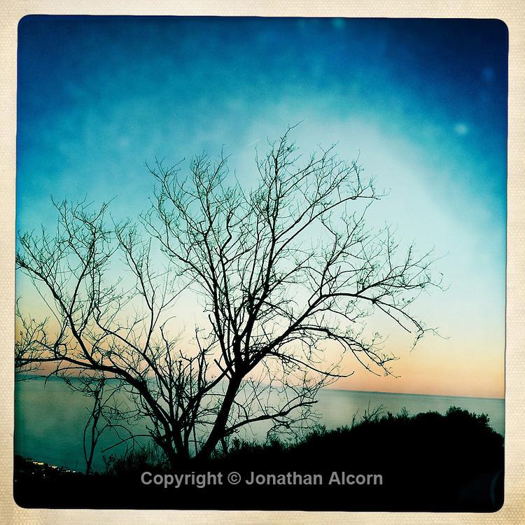 A barren tree in winter in the Malibu Hills.