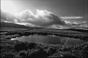 Pool on the Horton Plains. Home of sambhur and leopard.<br />Copyright: Dominic Sansoni