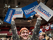 02 MARCH 2020 - ST. PAUL, MINNESOTA: RHILEY LARSON, from Duluth, MN, waves Bernie Sanders signs at a Bernie Sanders Get Out the Vote rally in the RiverCentre in St. Paul. More than 8,400 people attended the rally. Minnesota is a Super Tuesday state this year and Minnesotans will go to the polls Tuesday. Minnesota Sen. Amy Klobuchar was expected to win her home state, but she dropped out early Monday, March 2.         PHOTO BY JACK KURTZ