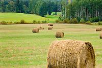 Round bales of hay in the McBride Valley British Columbia Canada