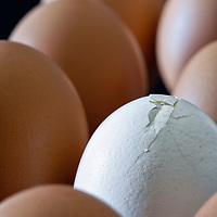 Image of brown eggs with dark background surrounding a white broken egg.