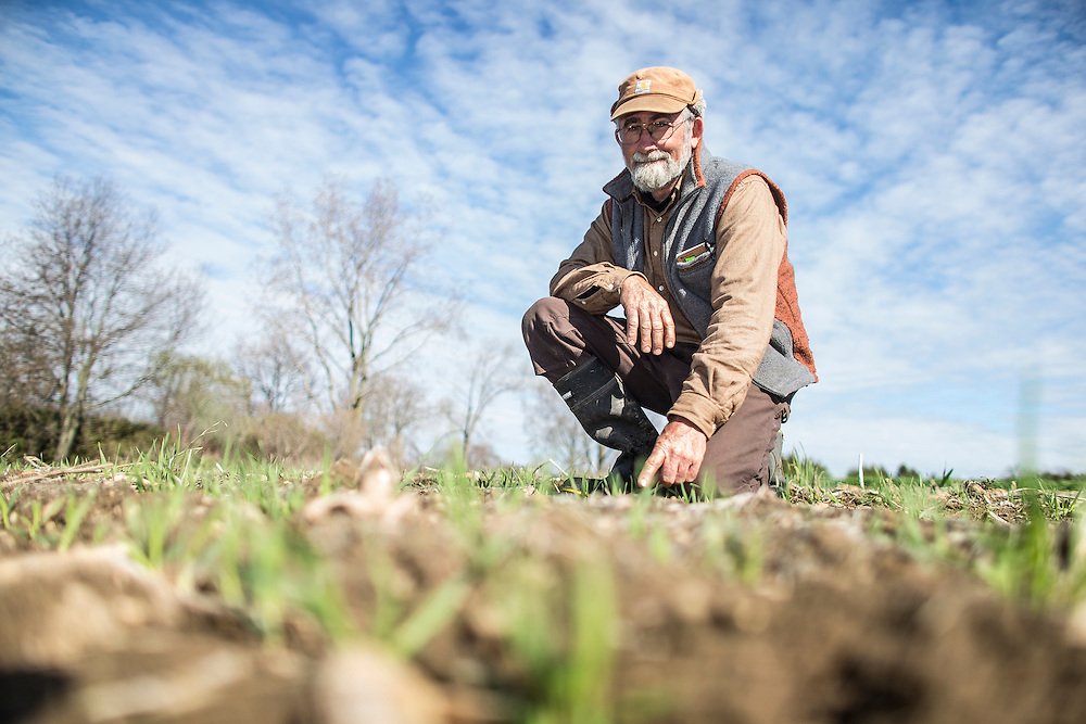 St.Thomas, Ontario ---2016-05-03--- Ken Laing of Orchard-Hill farm near St. Thomas, Ontario shows some of the sprout of oats and barley on May 3, 2016. He planted the crop in mid March.<br /> GEOFF ROBINS Farmers Forum