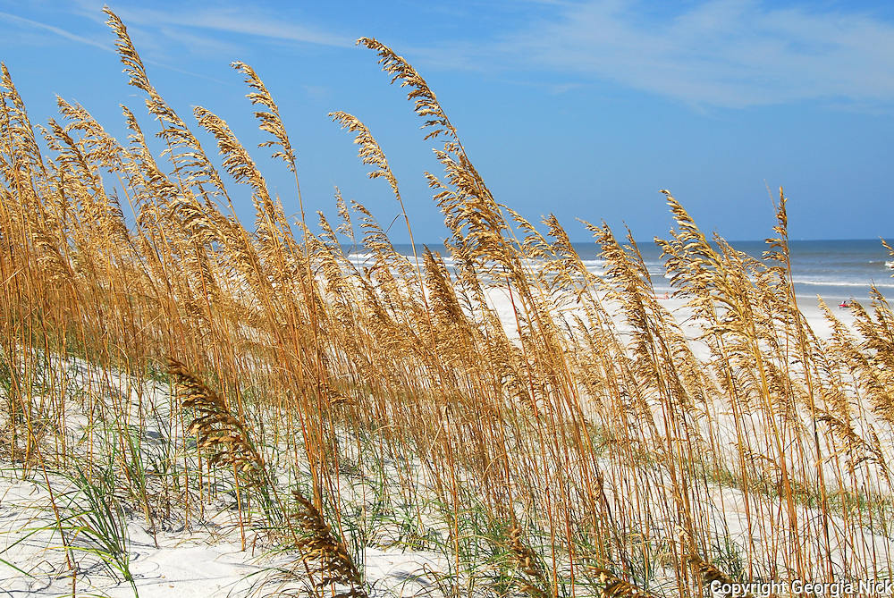Sand dunes and sea oats frame the Atlantic Ocean, on the white sand  beach of Anastasia State Park in St. Augustine, Florida.