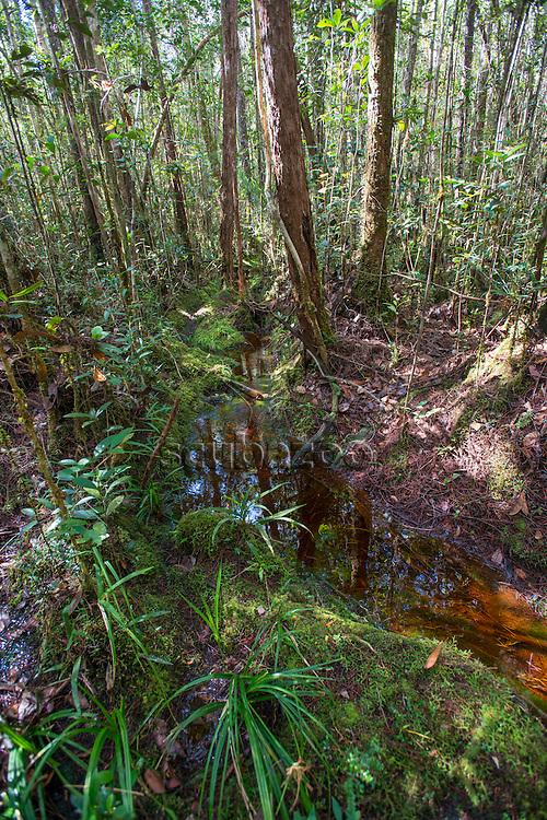Stream running throuh the jungle, Maliau Basin, Sabah, Malaysia, Borneo,