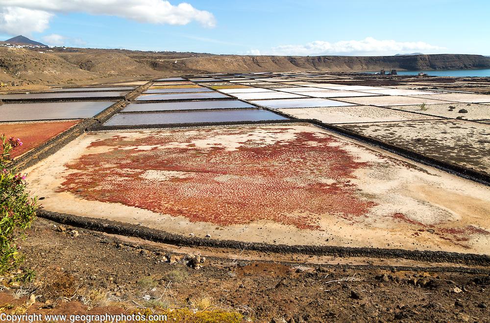 Traditional sea salt production, Salinas de Janubio, Lanzarote, Canary Islands, Spain