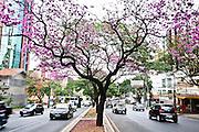 Belo Horizonte_MG, Brasil...Avenida do Contorno no bairro Lourdes em Belo Horizonte, Minas Gerais...Contorno avenue in Lourdes neighborhood in Belo Horizonte, Minas Gerais...Foto: JOAO MARCOS ROSA / NITRO