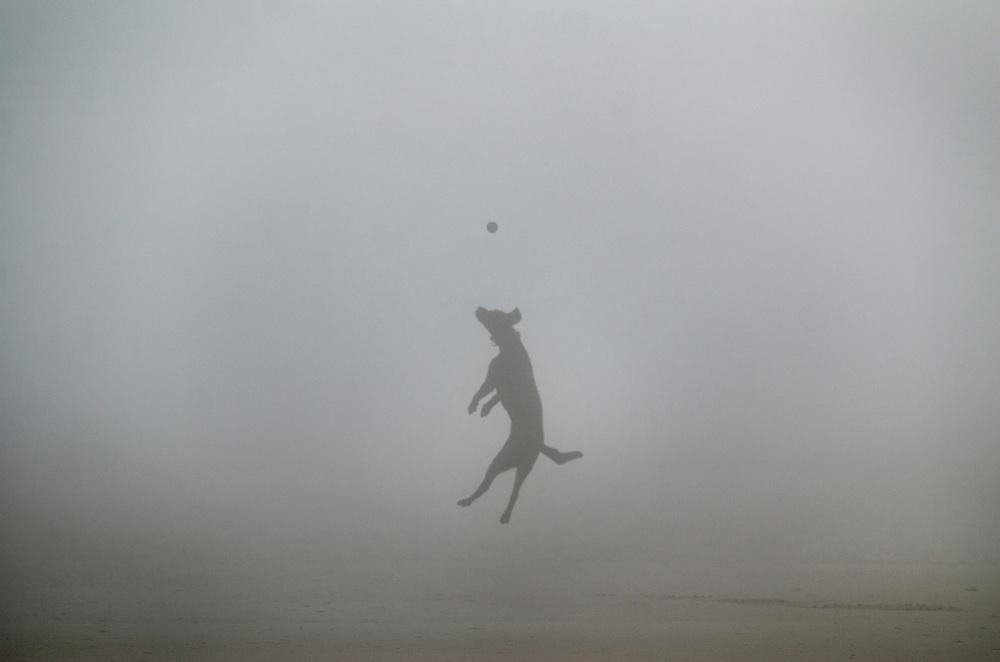 A foggy doggy day at the beach, Hilton Head Island, 2015.