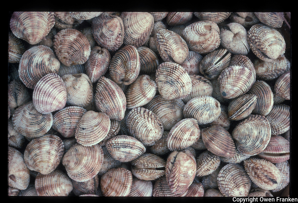 Clams, France- Photograph by Owen Franken