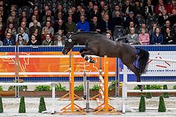 106, For Ever De<br /> KWPN hengstenkeuring - 's Hertogenbosch 2020<br /> © Hippo Foto - Dirk Caremans<br />  29/01/2020