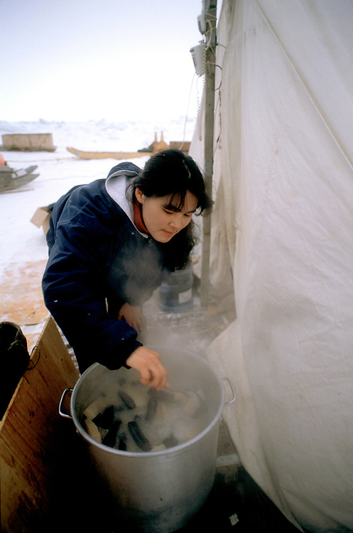 Barrow, Alaska. Women cooking and serving fresh Muktuk, or whale skin and blubber, as men harvest the carcass of a bowhead whale killed during the annual hunt