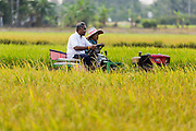 17 MARCH 2014 - LAM LUK KA, PATHUM THANI, THAILAND: A couple rides their tractor through their rice field in Pathum Thani province. The drought in central Thailand has cut the  rice crop by about one third. It hasn't rained in central Thailand in more than three months, impacting agriculture and domestic water use. Many farms are running short of irrigration water and salt water from the Gulf of Siam has come up the Chao Phraya River and infiltrated the water plants in Pathum Thani province that serve Bangkok. PHOTO BY JACK KURTZ