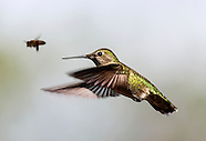 Hummingbirds in Kenneth Hahn State Recreation Area