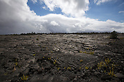 Big Island. Hawai'i Volcanoes National Park. Giant old lava flow, 1969-1974.