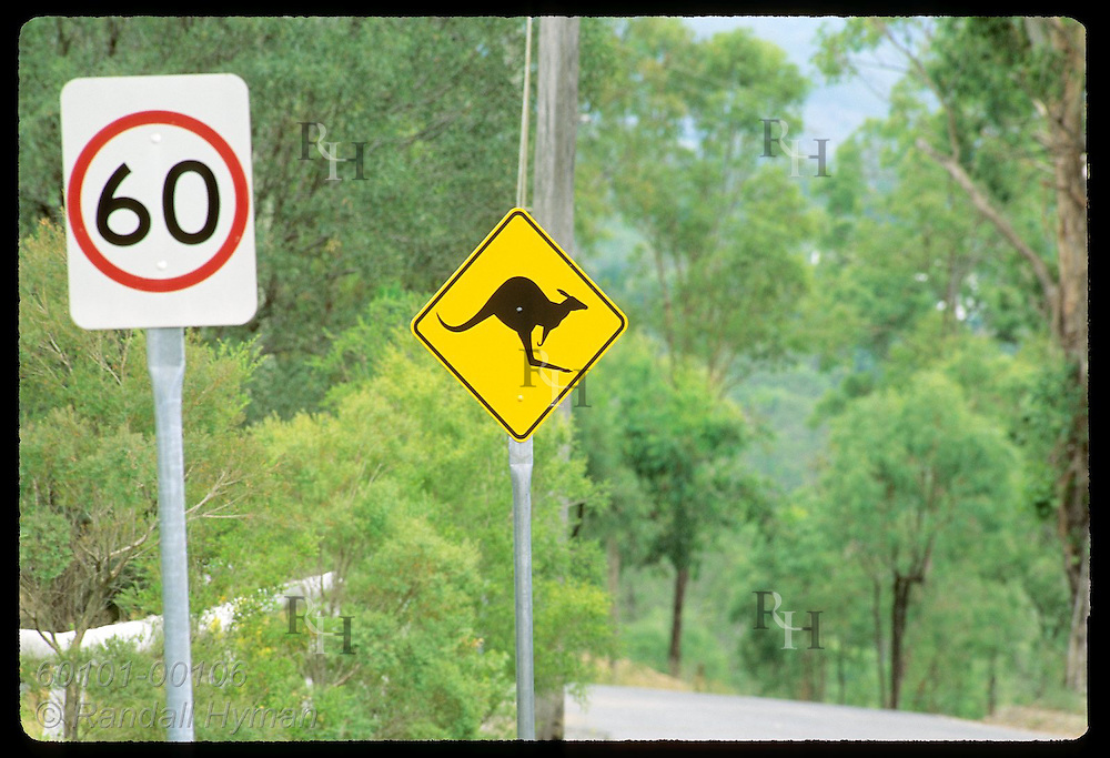Kangaroo-crossing sign and 60-km speed limit sign are posted on highway outside city of Brisbane Australia